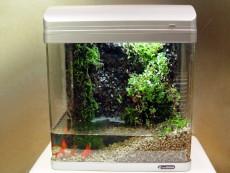 에코리움 Ecorium(300)