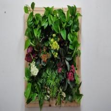 에코월 편백나무원목 식물액자(EP251W)