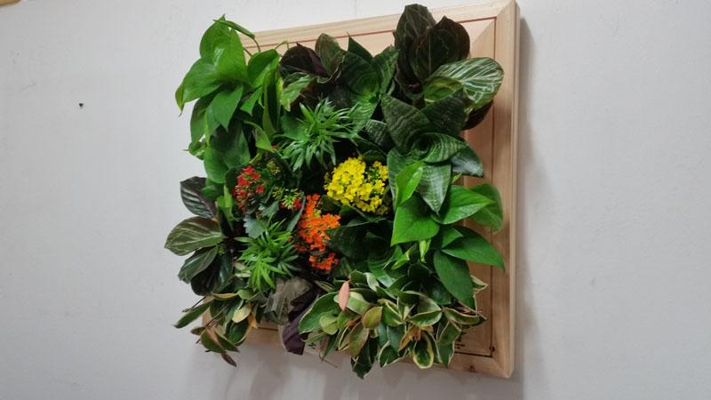 에코월 편백나무원목 식물액자(EP151W)