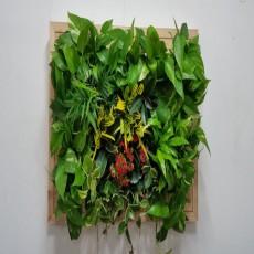 에코월 편백나무원목 식물액자(EP101W)